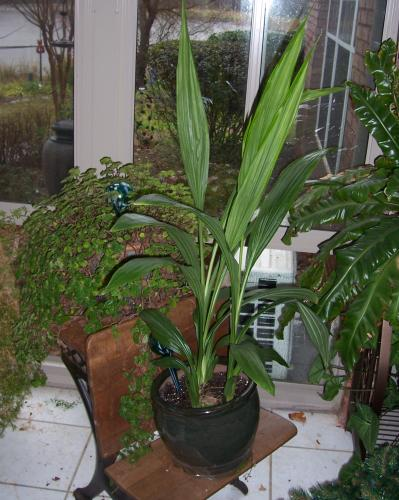 House Plants That Make Dogs Sick
