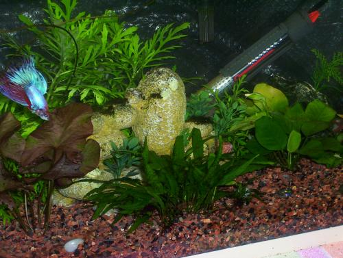 10 Gallon Freshwater Tank (from left angle)