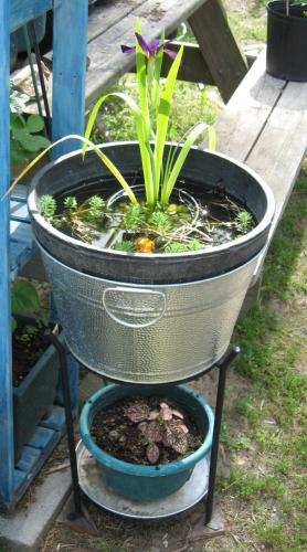 My 3rd Container Water Garden