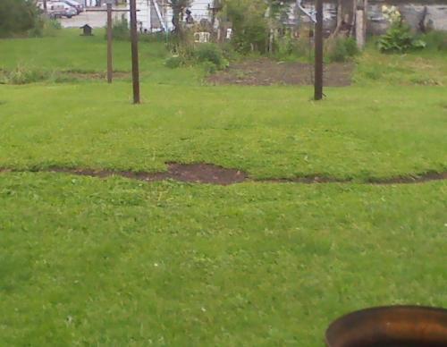 My veggie garden Sorda