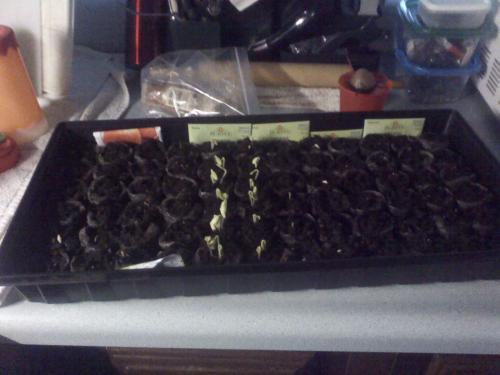 Veggie seeds