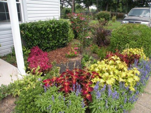 Our Coleus really did well, and the entrance to our small house is pretty.