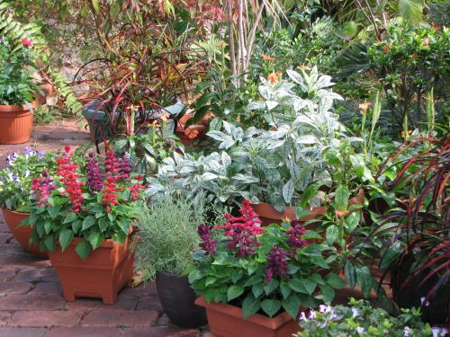 Potted Plants in the Courtyard Garden