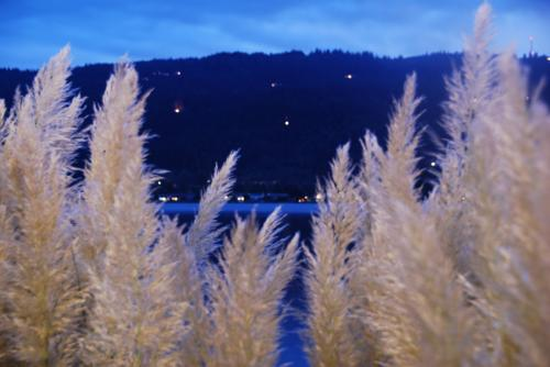 Seattle Sunset with Pampas Grass