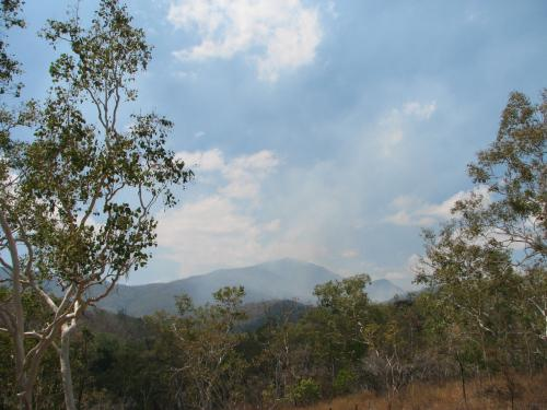 Looking over the bushland during 'dry' season