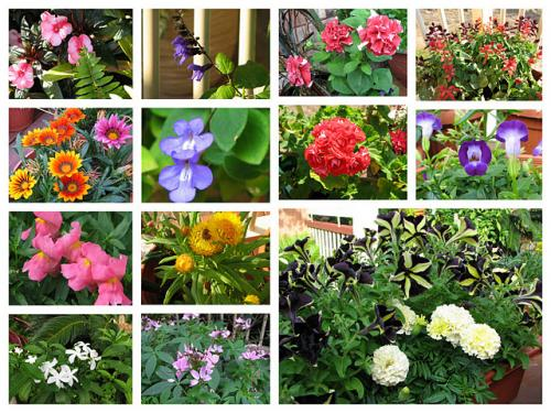 Mid-Spring Blooms In The Courtyard Garden