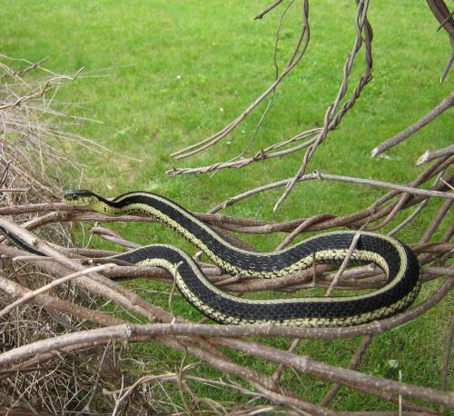 Eek A Snake