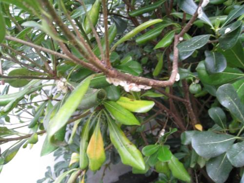 how to get rid of white flies on plants